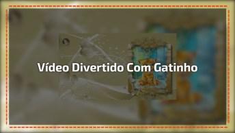 Vídeo Divertido Com Gatinho Comemorando A Chegada Do Fim De Semana!