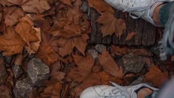 Mensagem De Indireta Para Gente Falsa - Falsos Amigos São Como Folhas De Outono!