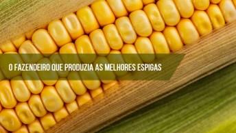 Mensagem Do Fazendeiro Que Produzia As Melhores Espigas De Milhos!