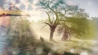 Vídeo De Motivação Com Mensagem Para Vida! A Vida É Um Verdadeiro Milagre!
