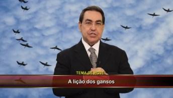 Vídeo Motivacional 'A Lição Dos Gansos', Para Compartilhar No Facebook!