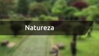 Momento De Apreciar A Natureza, Veja Que Lugares Mais Belos E Cheios De Vida!