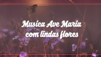 Musica Ave Maria Com Lindas Flores E Imagens, Compartilhe!