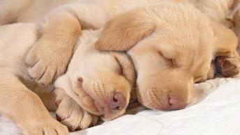 Boa Noite Com Imagens De Cachorros E Gatos!