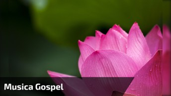 Frases Da Bíblia Com Música Gospel, Um Vídeo Maravilhoso Para Compartilhar!