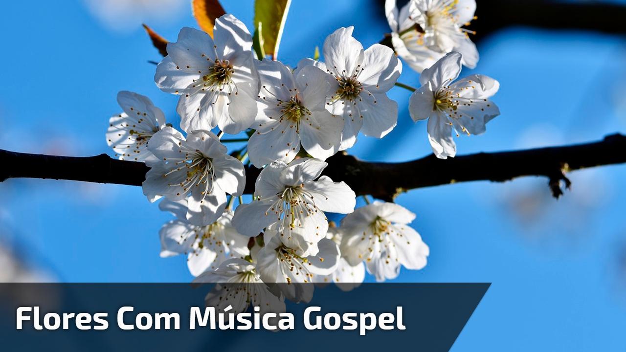 Flores com música gospel