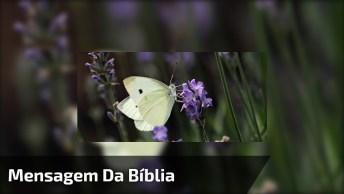 Mensagem Da Bíblia Para Os Filhos - ( Provérbios 23: 22 )!