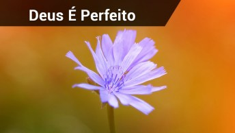 Tenha Fé, Deus É Perfeito Ele Sempre Está Na Sua Vida