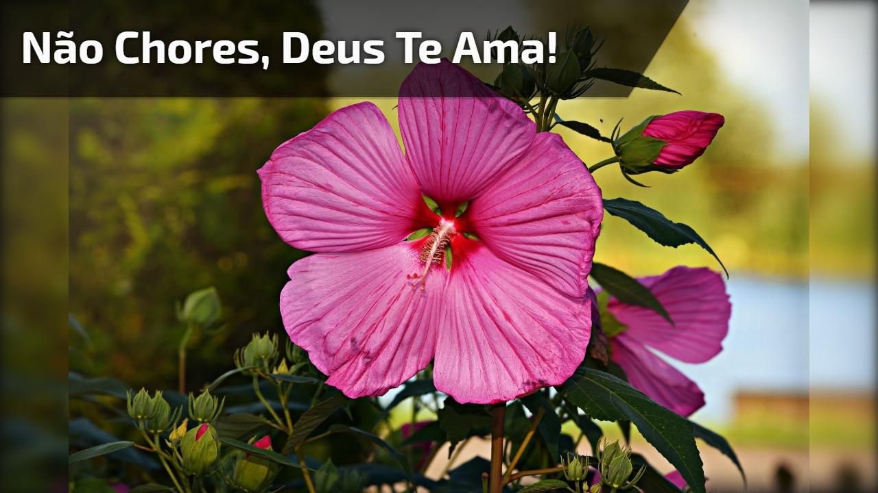 Não chores, Deus te ama!