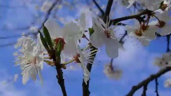 Video Gospel Com Flor E Borboleta Voando, Deus Estará Olhando Por Você!