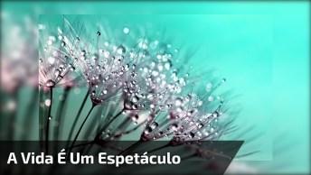 A Vida É Um Espetáculo Emocionante, Um Lindo Vídeo Com Flores Para Você