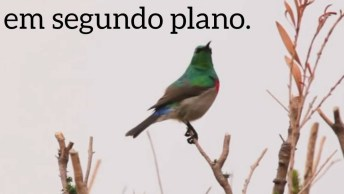 Mensagem De Deus Com Pássaro, Para Refletir E Compartilhar!