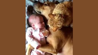 Trio Fofo Dormindo - Um Gato, Um Bebê E Um Cachorro, Umas Fofuras!