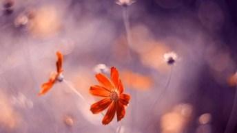 Arte De Fotografar Flores, Simplesmente Lindo Trabalho, Confira!