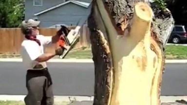 Homem Transforma Tronco De Árvore Em Animais Surpreendentes!
