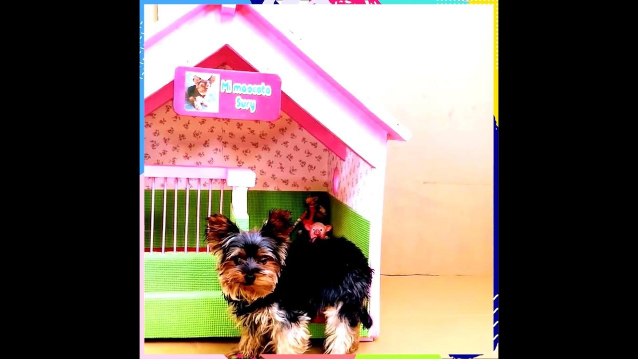 Artesanato com caixa de papelão, aprenda a fazer uma linda casinha de cachorro!