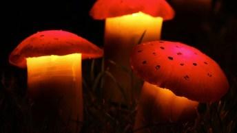 Cogumelos Para Enfeitar Seu Jardim, Feitos Com Silicone E Cola Quente!