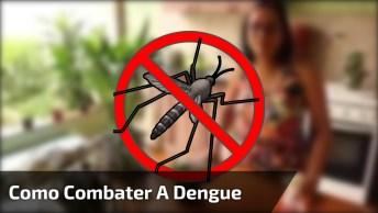 Como Combater A Dengue Em Seus Vasinhos De Planta, Dicas E Ótimas E Eficazes!