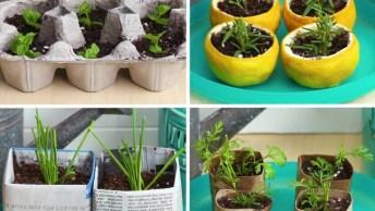 Como Fazer Suas Próprias Mudas De Plantas, Em Lugares Inusitados!