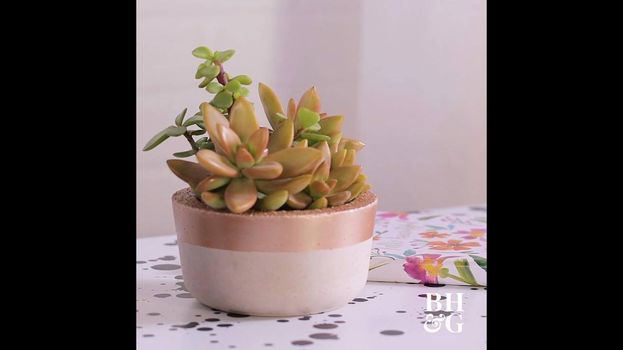 Como fazer um vasinho de cimento para sua planta Suculentas