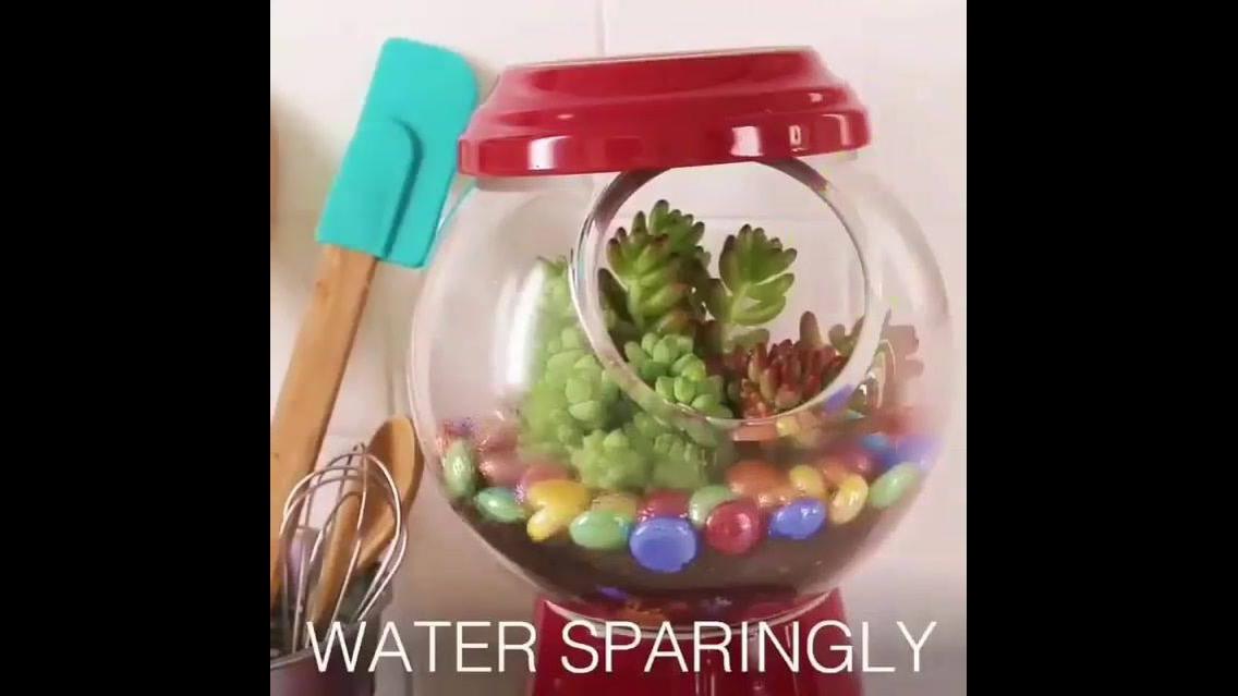 Como fazer um vasinho de planta para suas Suculentas