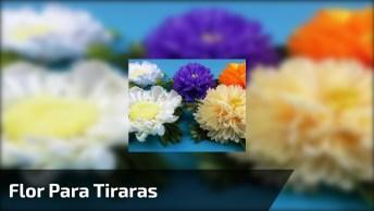 Flor Para Tiraras, Um Verdadeiro Jardim De Cores, Confira!