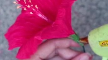 Tutorial De Flor De Hibisco Com Papel Crepom, Olha Só Que Coisa Mais Linda!!!