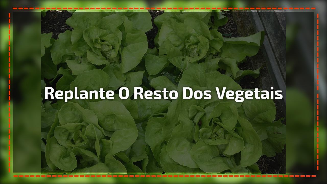 Replante o resto dos vegetais