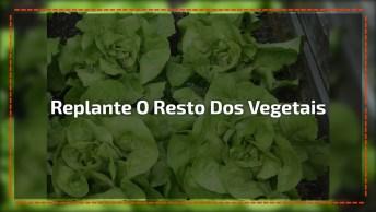 Aprenda A Plantar Os Seus Vegetais, Com Aqueles Que Comprou Na Feira!