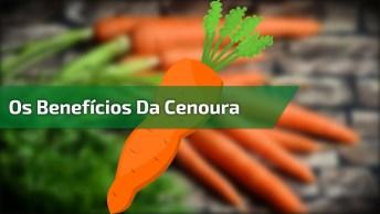 Benefícios Da Cenoura Para A Saúde, Você Vai Adorar Saber De Tudo Isso!