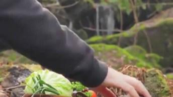 Hambúrguer Artesanal, Um Vídeo Que Te Prende Do Começo Ao Final!