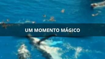 Um Momento Magico Para Estes Turistas Que Nadaram Com Uma Baleia Em Auto Mar!
