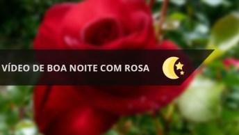A Mais Bela Rosa Para Desejar Boa Noite A Você!