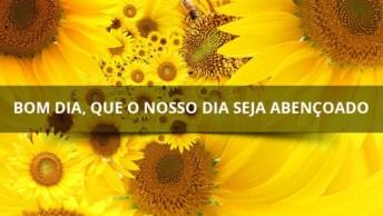 Video Lindo De Bom Dia Com Flores E Com Frases Motivacionais
