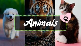 Vídeos de Animais