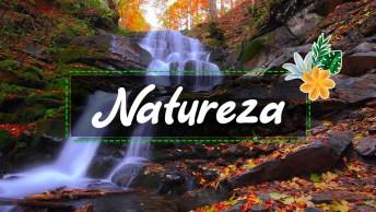 A natureza nos encanta, veja os melhores videos da natureza capturado no momento certo.