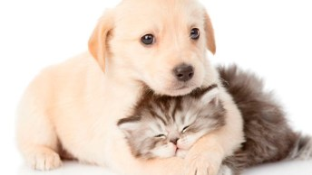 Você E A Segunda-Feira Representada Por Um Gato E Um Cachorro!