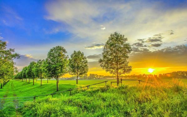 HD Golden sunset on the green field Wallpaper | Download ...