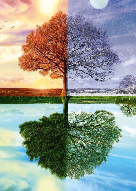 Puzzle Seasons Tree Schmidt Spiele 500 Pieces Jigsaw