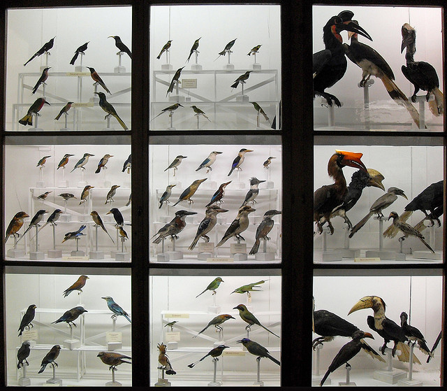 Bird diversity (a showcase in the Museum of Natural History of Florence, Italy).