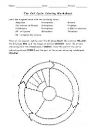 The Cell Cycle Coloring Worksheet
