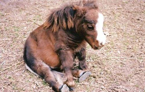 https://i1.wp.com/data.whicdn.com/images/22561830/735-horse-baby_large.jpg