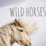 Wild Horses Birdy Uploaded By Cila On We Heart It