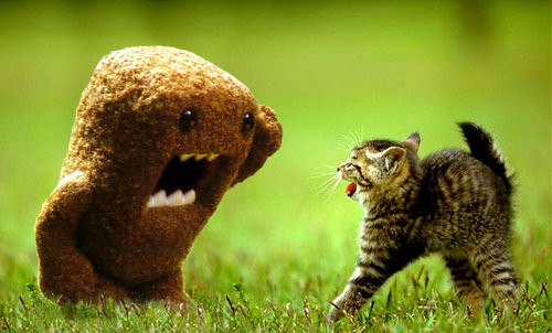 Divertido,kitty,waaa,domo,funny,scare-0b2937c5419a11afb3a9509b92894774_h_large