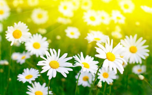 صور زهور رائعه 2017 خلفيات ورود 2017 خلفيات زهور روعة زهور