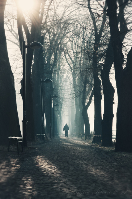 Trees-tree-alley-morning-winter-favim.com-474914_large