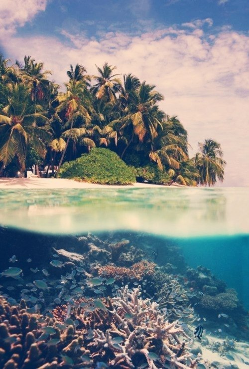http://mistanasteisha.tumblr.com/post/37554683178/i-just-want-to-be-there-to-sunbathe-swim-and-do