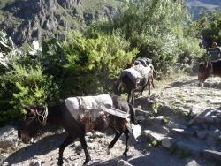 Arequipa et le canyon del Colca