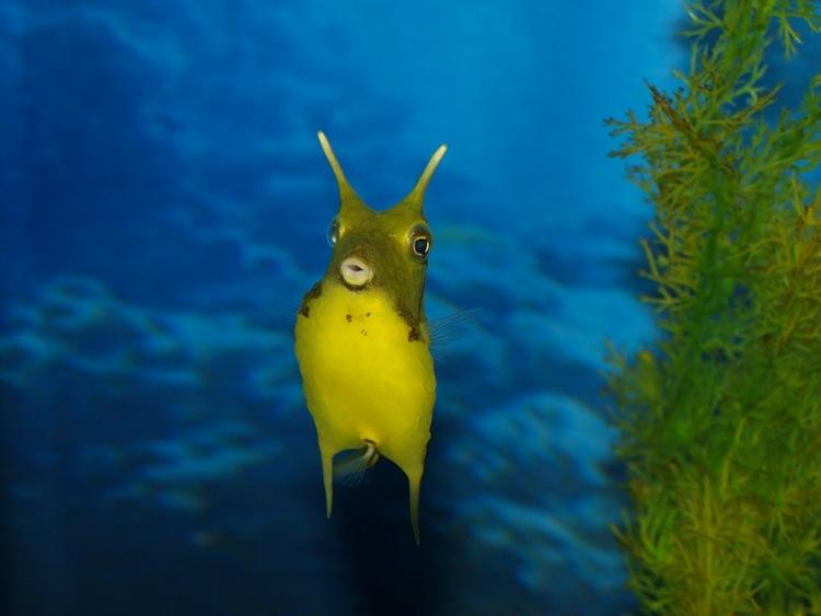 Странни морски същества