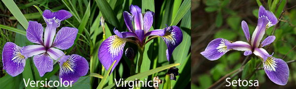 Irises dataset for classification